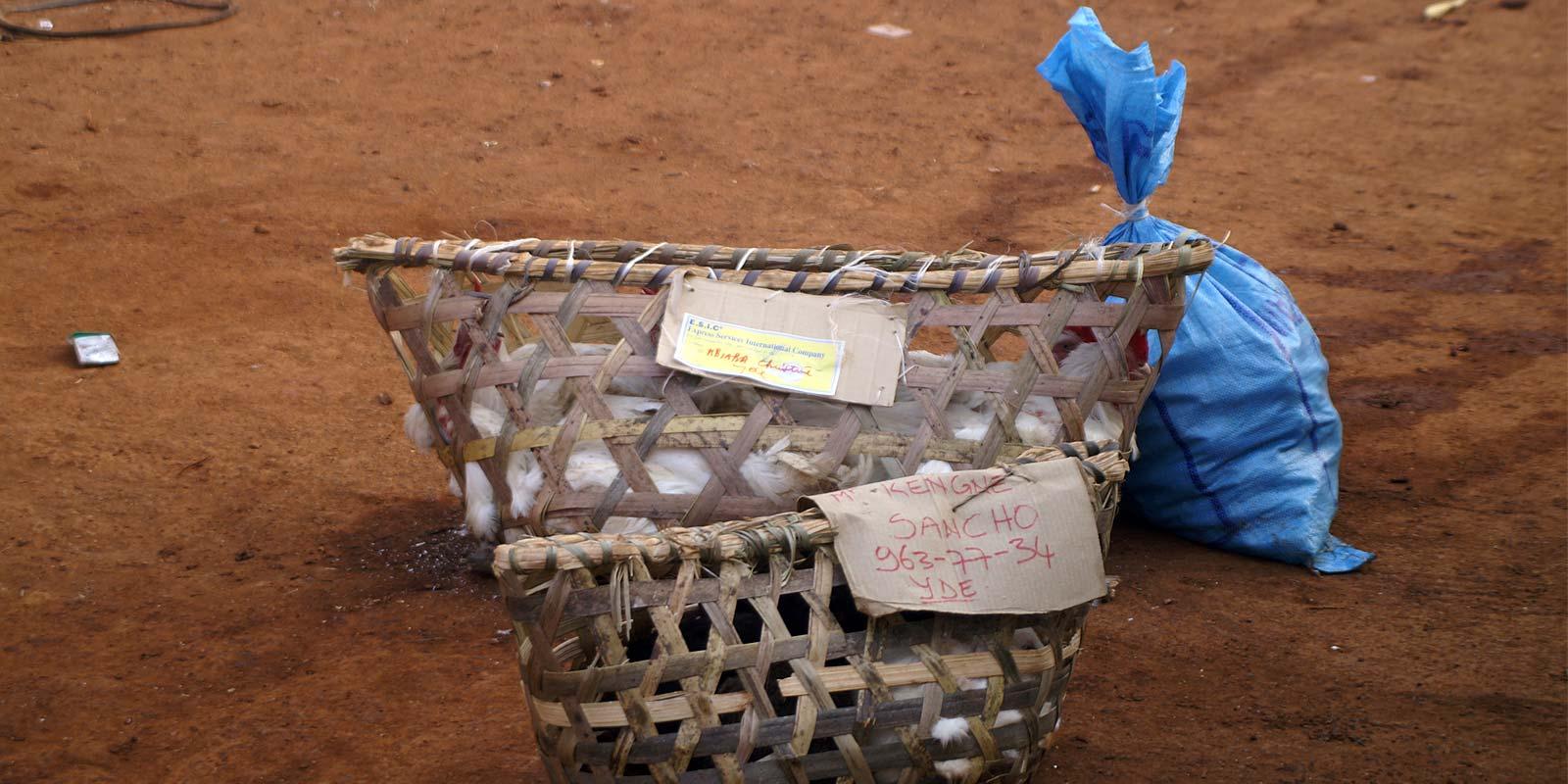 Direzione Bafoussam, Camerun orientale