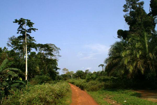 Foresta di Olamzé, Camerun