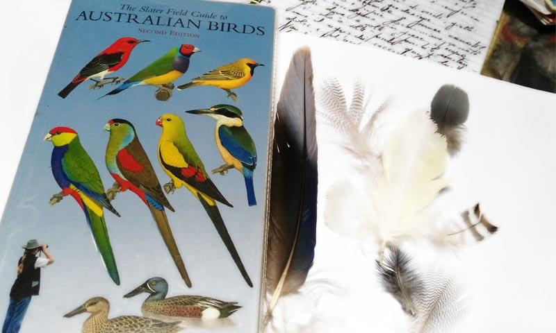 australian-birds-guide-800