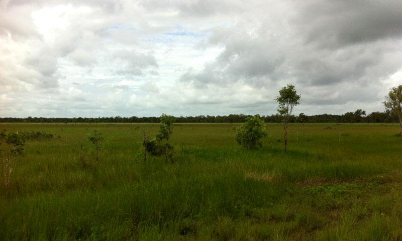 wetlands-800-3